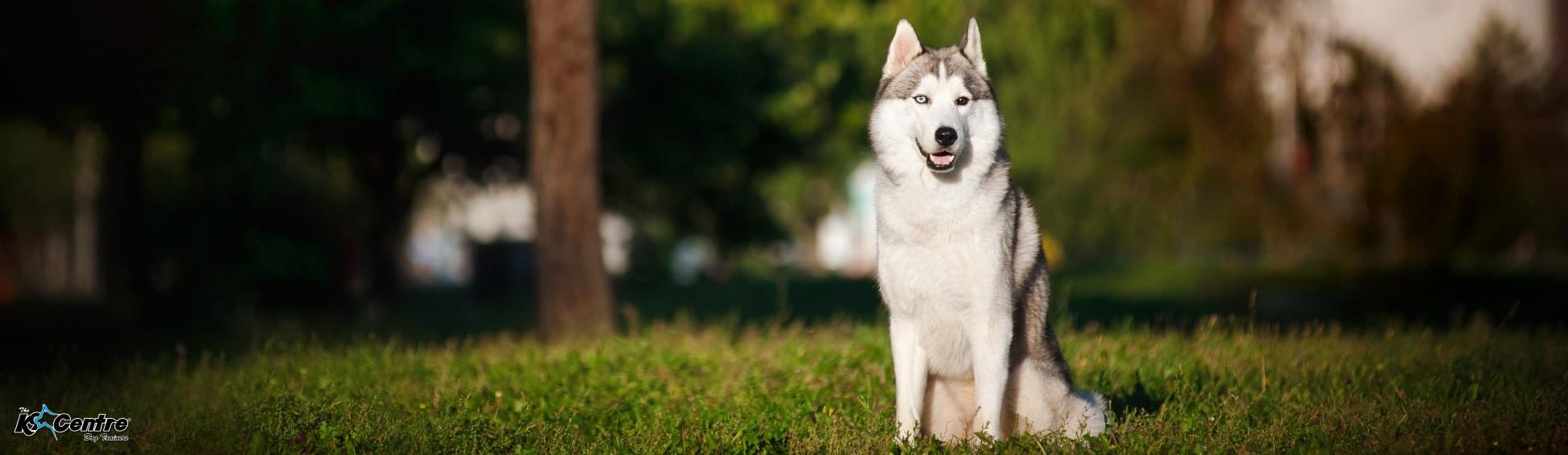 Dog Obedience Training Australia