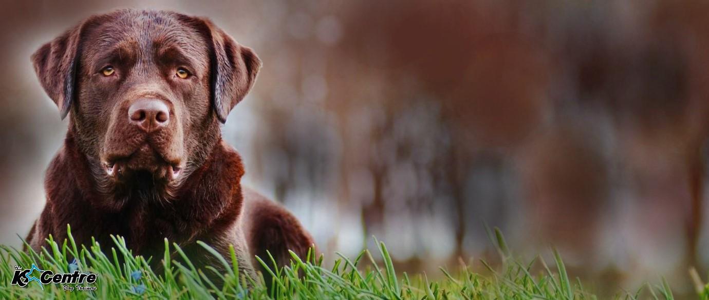 Dog Training Australia