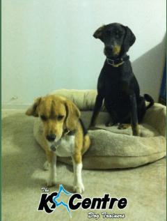 Bart and Luther Dog Training Sunshine Coast QLD