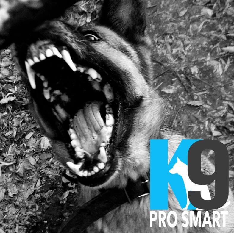 Dog Aggression Problems, Reactive Dog Problems, Dog Aggression