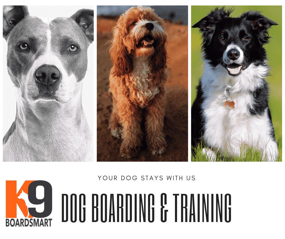 Dog Boarding and Training