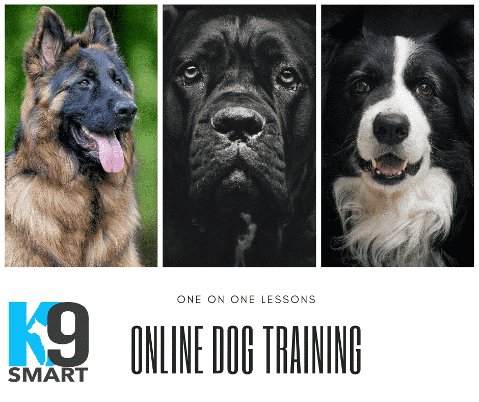 Online-Dog-Training-Lessons.png