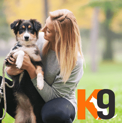 Live in Dog Training Courses with The K9 Centre