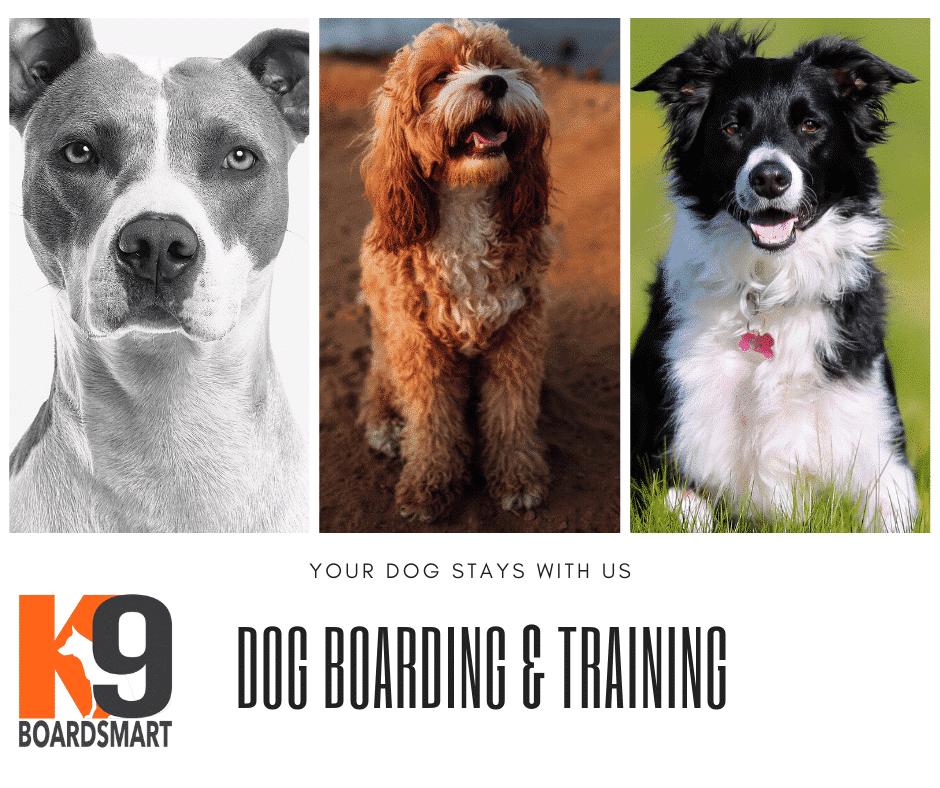 Dog Training and Boarding The K9 BoardSmart Training Program