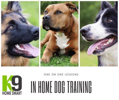 In Home Dog Training Brisbane Behavioural Dog Trainer