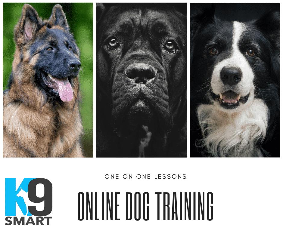 Online Dog Training Lessons