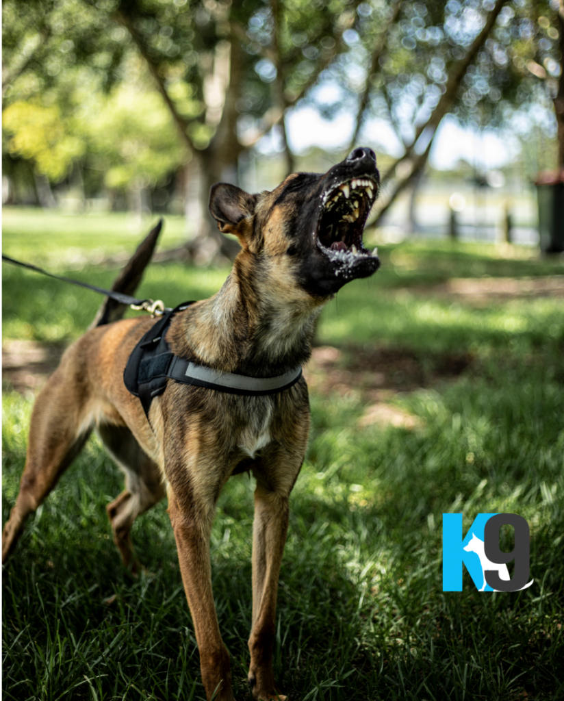 Protection Dog Training with The K9 Centre
