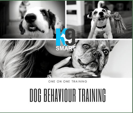 dog behaviourist Brisbane for ALL of you dog Training Needs Brisbane Queensland