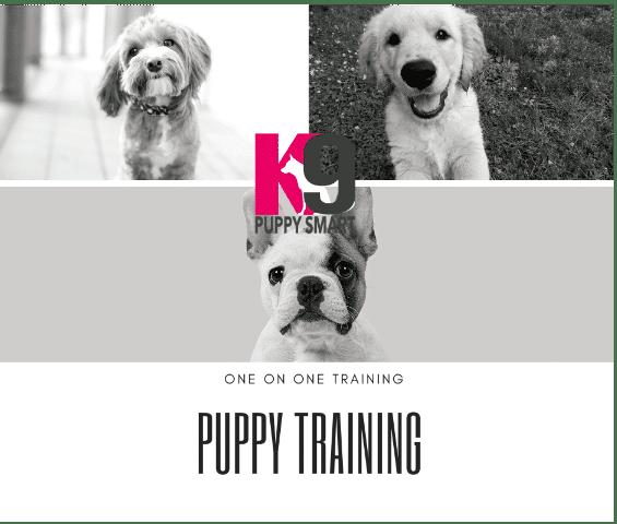 Puppy Training Brisbane, Brisbane North, Narangba all areas