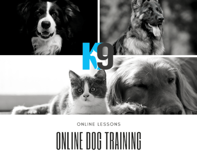 Online Dog Training courses with Martin Dominick from The K9 Centre Dog Trainers Australia